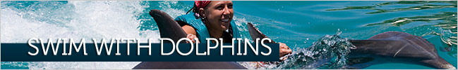 Swim with Dolphins on Roatan